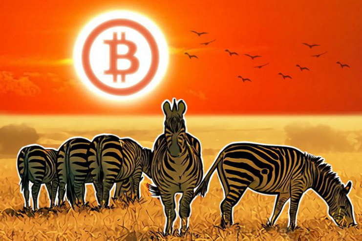 Zebra Bitcoins